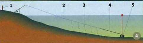 толстолобик со дна или с поверхности